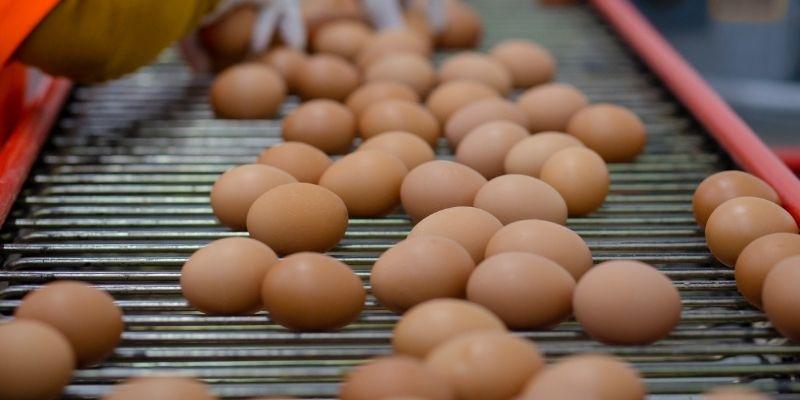 Free range eggs from New Zealand