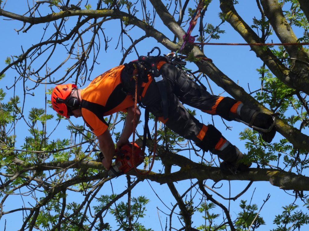 Perth arborist in action